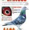 《信鸽365》杂志第六期封面