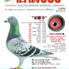 《信鸽365》杂志第八期封面