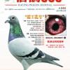 《信鸽365》杂志第九期封面