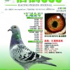 《信鸽365》杂志第十期封面
