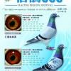 《信鸽365》杂志第十一期封面