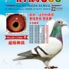 《信鸽365》杂志第十四期封面
