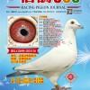 《信鸽365》杂志第十五期封面